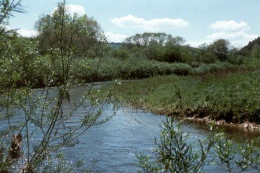 Renaturierung der Donau bei Tuttlingen